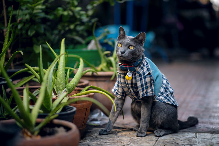 My Cat Pets Cat Lovers Cat Plant Nature Black Color One Animal Domestic Animals Focus On Foreground No People Green Color Looking Candid Photography Candid Nikonphotography Nikon Vertebrate Domestic Day Cats Of EyeEm Cat♡ Cats Collar Dog Small Looking Away Canine Mammal