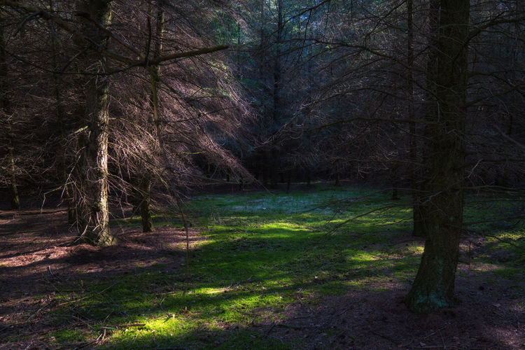 love this open space in the forest, looks like an fairytale Bare Tree Beautiful Beauty In Nature Branch Day Forest Grass Green Nature No People Outdoors Scenics Tranquil Scene Tranquility Tree Tree Trunk The Great Outdoors - 2017 EyeEm Awards