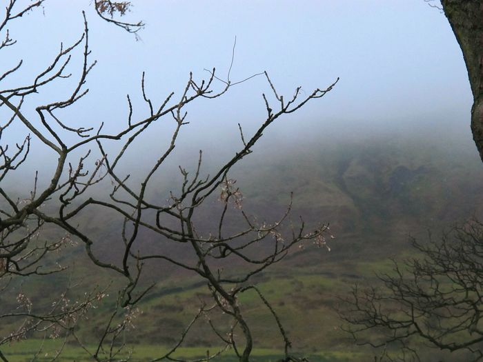 Tree Branch Nature Bare Tree Silhouette No People Beauty In Nature Sky Outdoors Fog Day Pendle Hill EyeEmbestshots Witchespath Eyeemphotography Eye Em Nature Lover Fine Art Photograhy Witchcraft  Cold Temperature Eerie Beautiful Change Foggy Day Landscape Scenics Beauty In Nature