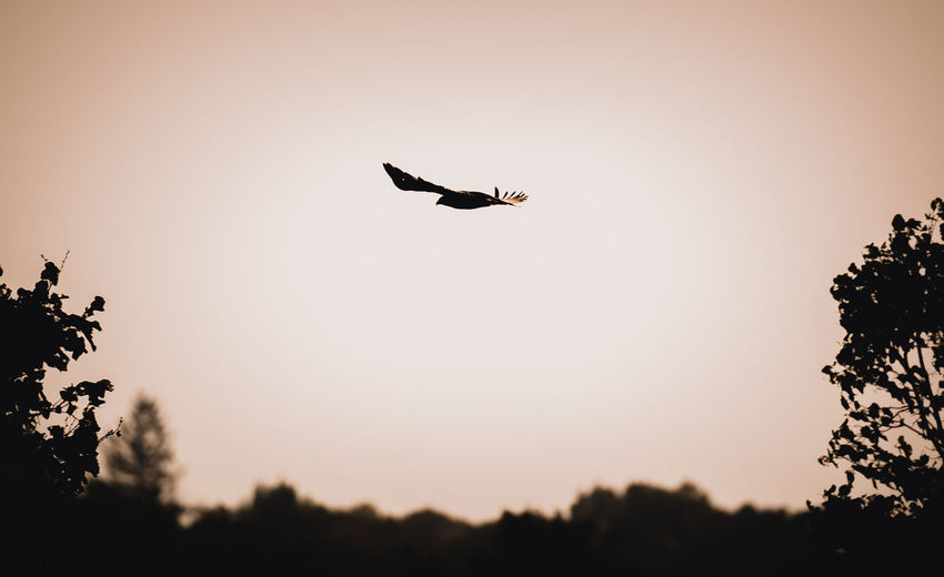 Low angle view of silhouette bird flying in sky