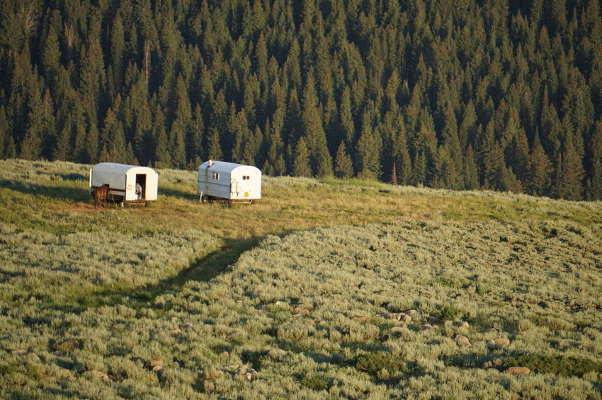 Sheeps. Middleofnowhere 4wheeling Green Color Grass Summer Outdoors Farm Faraway Fields Tree Pine Tree MonteCristo  Utah