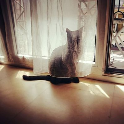 Have you met Belle? Playing With The Animals Cats Hide And Seek EyeEm Animal Lover Cute Cats