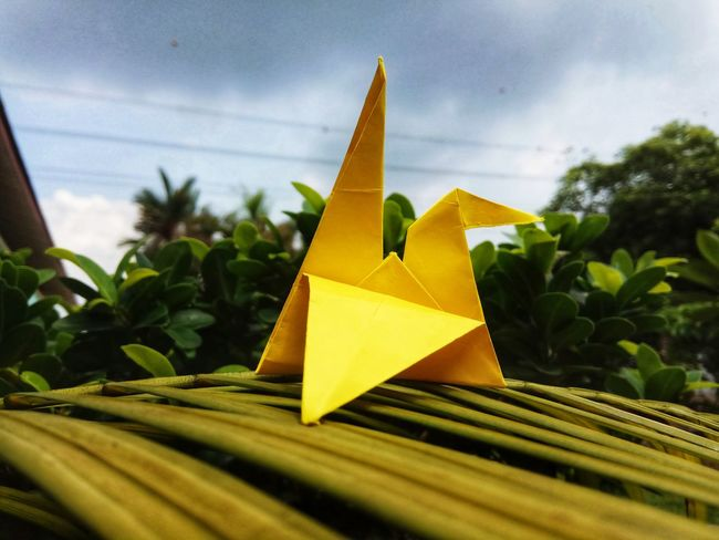 burung kertas Origamiart EyeEm Selects Art is Everywhere Origami Daylight Paper Artwork Tree Tree Leaves Green Photography Yellow No People Leaf Close-up Outdoors Sky Day