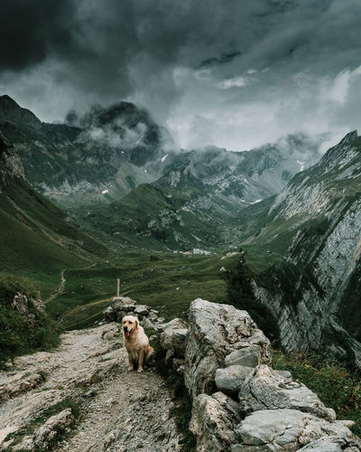 View of a dog on a mountain peak