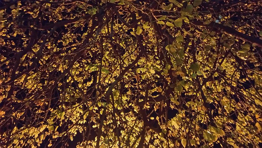 Its raining gold......leaves 😉Gold Colored Full Frame Backgrounds No People Splashing Close-up Motion Abstract Gold Night Outdoors Nature Water Beauty In Nature Tender Golden Leaves Of Avenue Tree Avenue Tree Branches