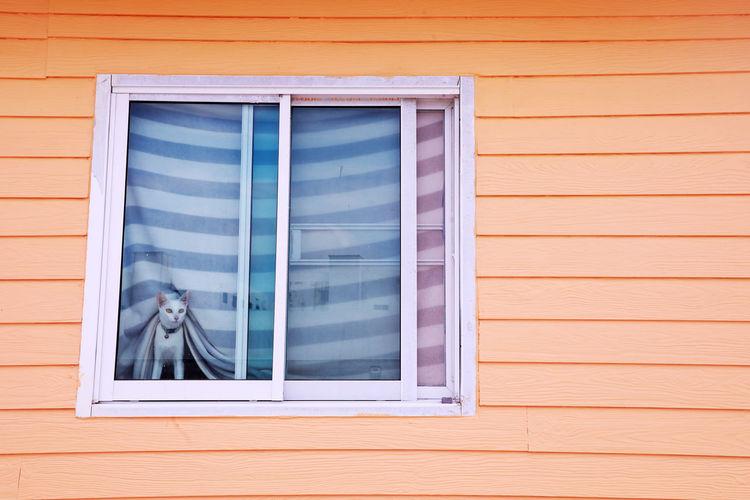 Cat seen through window
