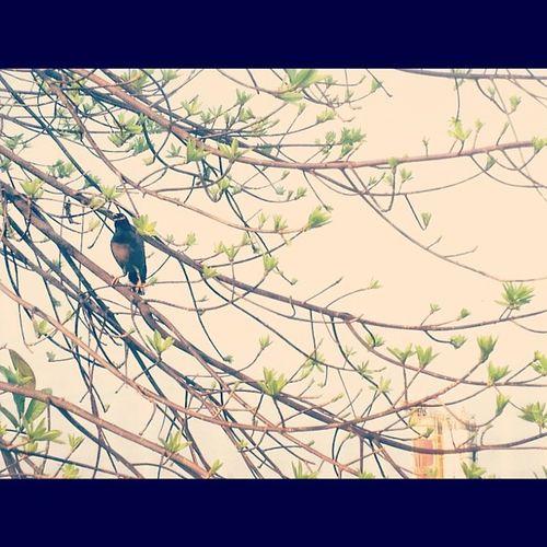 Sunday somewhere Sunday Holiday Bangkok Thailand Bird Instarpic Instargram