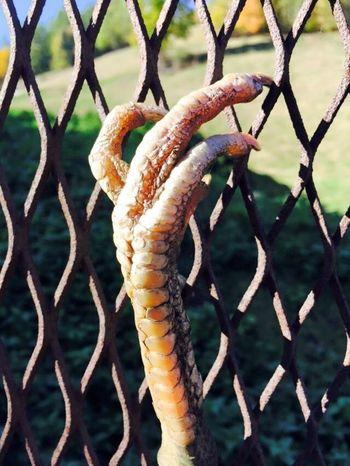 Takasytuacja Hand Animal zaznaczam, że przy robieniu tego zdęcia nie ucierpiało zwierze... Check This Out KURA  Chicken. Farm Farm Life