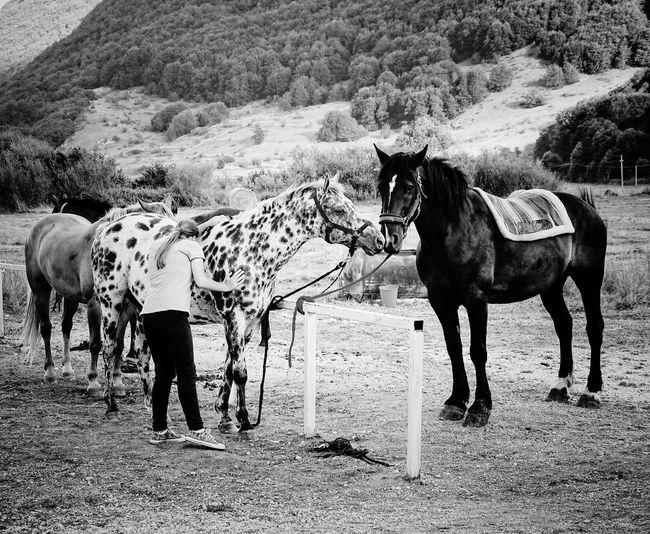 Horses standing in ranch