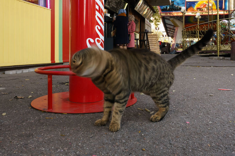 Mammal One Animal Domestic Animals Pets Domestic Vertebrate Street City Feline Cat Day Road Domestic Cat Outdoors Motion Transportation Blurred Motion People Whisker Tabby