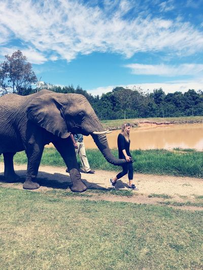 Elefant Sanctury The Crags Togetherness Love Friendship Tranquility Nature Rear View Animal Themes Hanging Out Lifestyles South Africa Landscape