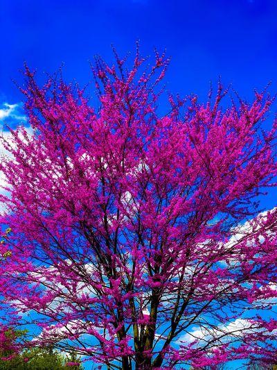 Pink Color Sky