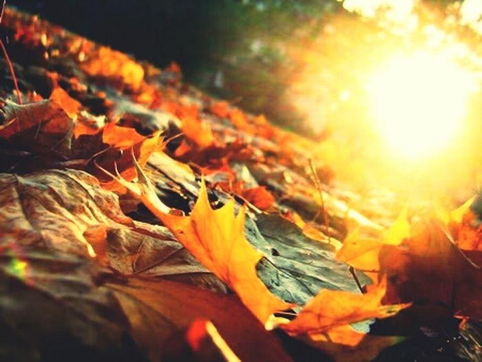 Autumn Leafs Beautiful Sun Enjoy folks!