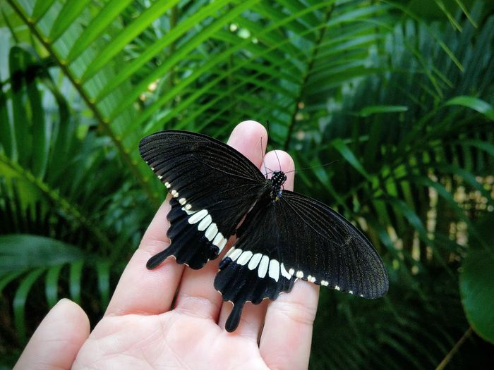 Close-up of hand holding butterfly perching on leaf