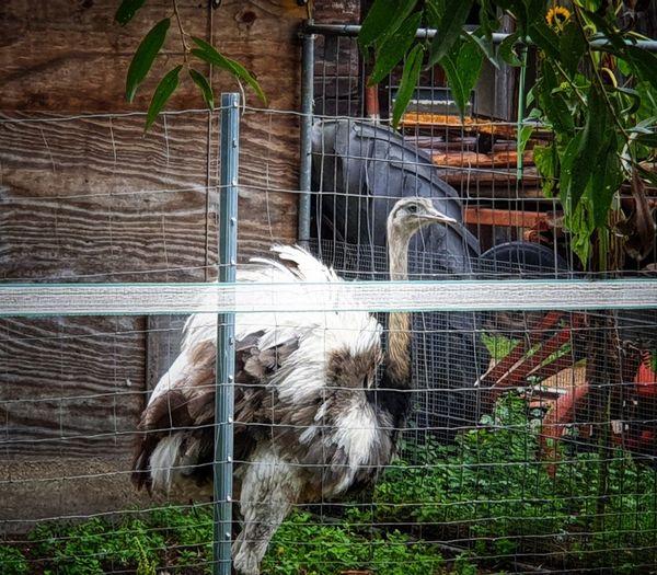 Fence Farm Bird