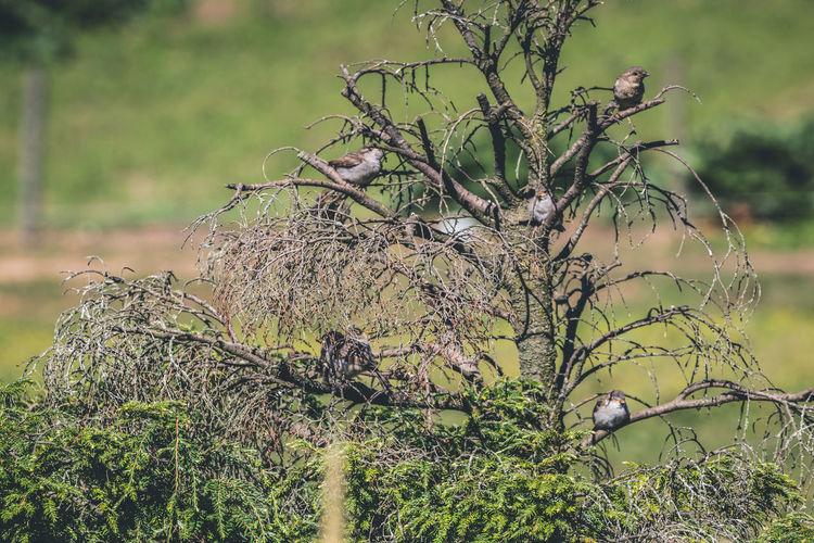 Gather birds on