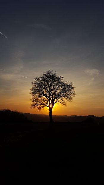 Single Tree Sunset Tree Silhouette Sky Sunset