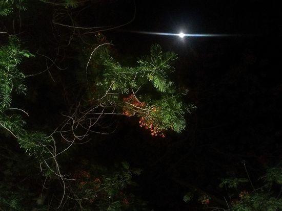 night tree Illuminated Christmas Decoration Celebration Black Background Sky Close-up Sparks