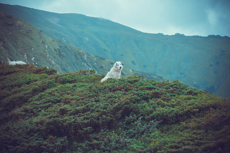Mountain Pets