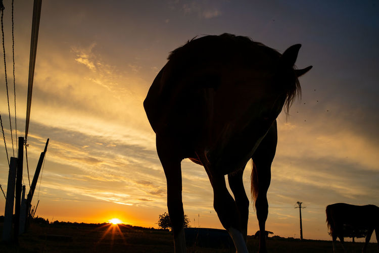 Silhouette Horse Standing On Field Against Sky During Sunset