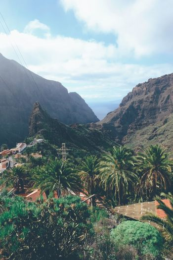 Canary Islands Tenerife Palm Tree Sea Tropical Climate Tropical Cliffs Cliff Los Gigantes Mountain Beauty In Nature Landscape Nature Outdoors Day Tranquil Scene Tranquility Sky No People Scenics Mountain Range Scenery