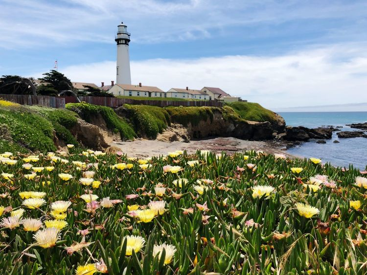 California Coast in spring time Plant Built Structure Architecture Sky Water Building Exterior Flower Lighthouse Flowering Plant Nature Growth No People Beauty In Nature