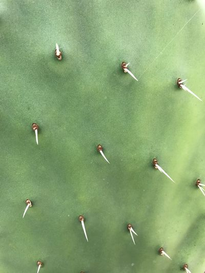 Green Color Green Nature Green Cactus Cactus Collection Cactus Thorns