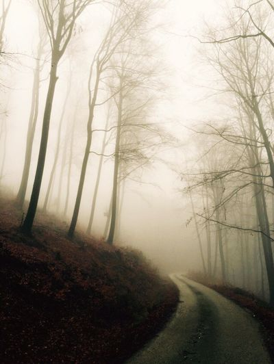 Empty road passing through forest