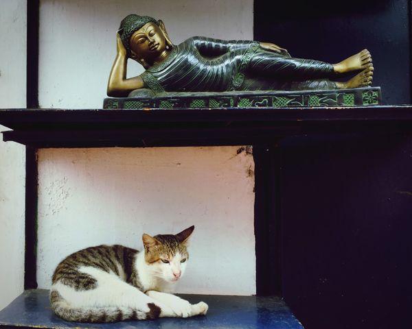 Domestic Cat Pets Animal Themes Domestic Animals One Animal Feline Cat Mammal Indoors  No People Sitting Day Portrait Close-up Buddha Sleeping Buddha Curio On Display Shop Trade
