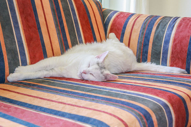 Danish Design Relaxing Animal Themes Close-up Day Domestic Animals Domestic Cat Feline Indoors  Lying Down Mammal No People One Animal Pets Relaxing Moments Sleeping Cat Sofa Striped White Cat