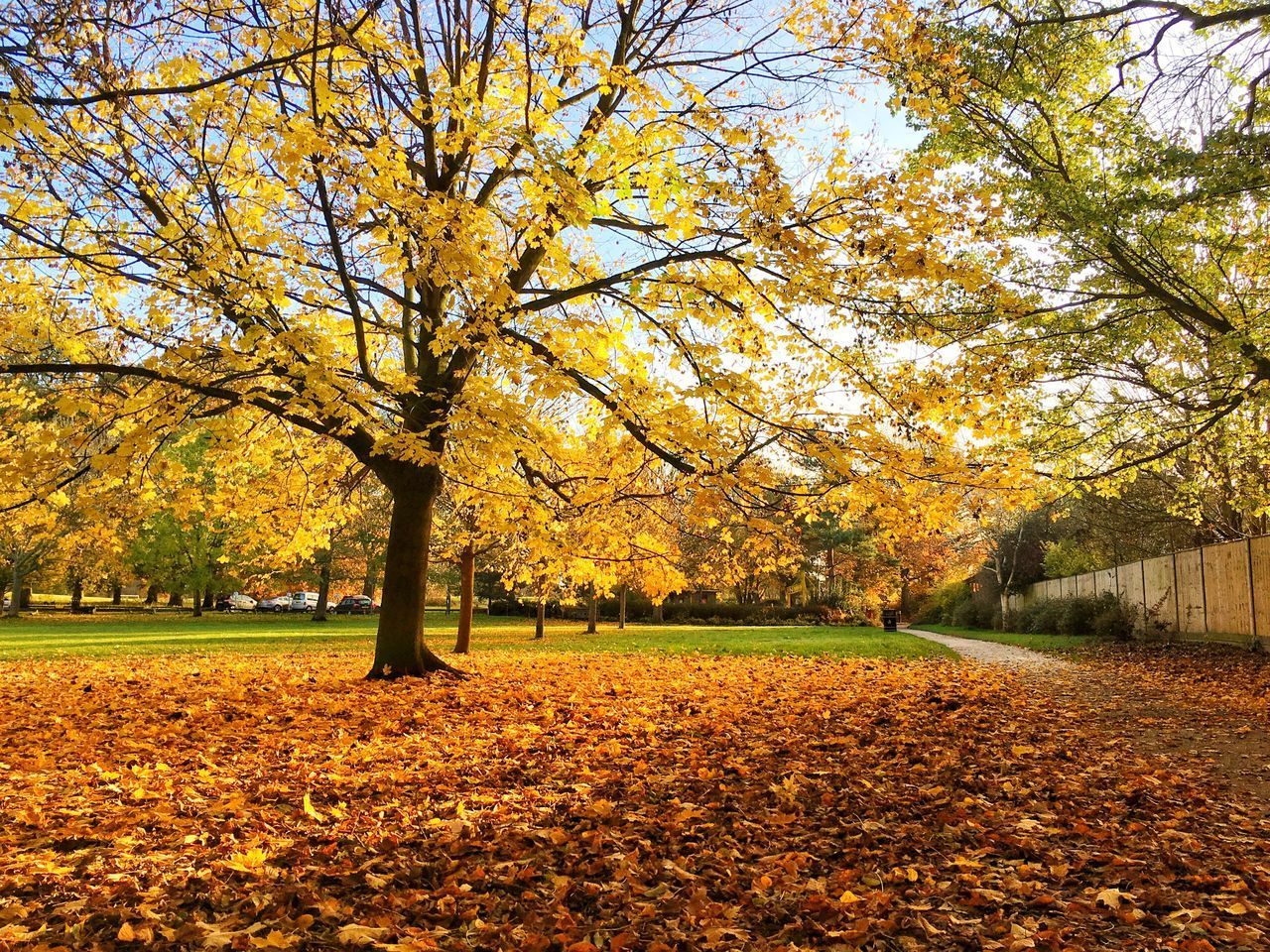 VIEW OF AUTUMNAL TREES IN PARK DURING AUTUMN