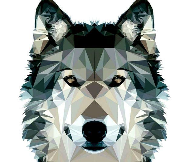 Modern Symmetry Animal Themes Dog Photoshopped No People Wolf Awsome Photoshopexpress Lowpolyart LowPolyPortrait Lowpoly Portraitv Nice Colors Colurs