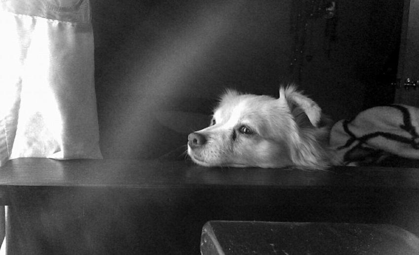 🐶 . . . Blackandwhite B&W Obsession Doggielove MyBabyBoy Gorgeous Day Mybestfriend MYeverything