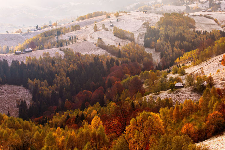 High angle view of trees on landscape during autumn