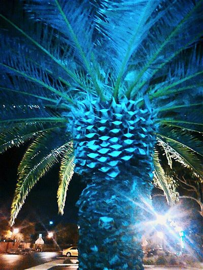 Urban Jungle Palm Tree Environment Protection Check This Out Night Photography Tree Taking Pictures EyeEm Best Shots - Trees Nightphotography Taking Photos