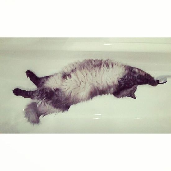 Потегушиииииии от Буська всем. Сонвванной человекокот моярадость суперкот котенок mylove Бусек чейтокрестник cat