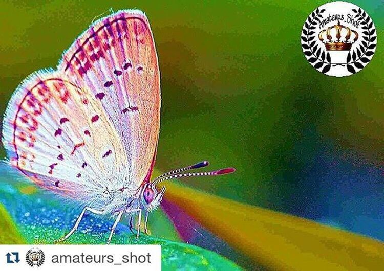 Thank you @solafa.jabali, @amateurs_shot for selecting this picture and feature this 😊🙏 Repost @amateurs_shot with @repostapp ・・・ . @Amateurs_Shot  present 📷 Artist of the Day 📷 ____________________________________________ 👑 Congratulations to 👑 @msadikun ▲▼▲▼▲▼▲▼▲▼▲▼▲▼▲▼▲▼▲ 🎩 Selected by @solafa.jabali.  ___________________________________________ ⚫ Thank you so much for Following @Amateurs_Shot ⚫ And keep tagging Amateurs_shot for only your own photos please! _____________________________________________ ⚫ Please show your support to our featured artist ▶ and visit their Amazing gallery for more great shots -_-_-_-_-_-_-_-_-_-_-_-_-_-_-_-_-_-_- ▶ founder : @xdbrianxd_bw. ▶️Adm: @solafa.jabali ~~~~~~~~~~~~~~~~~~~~~~~~~~~~~~~~~~~~~~~~~~ visit and follow our other hubs: ▶️joyful_pics_ ▶️@amateurs_bnw ▶️@amateurs_minimal ★★★★★★★★★★★★★★★★★ Igglobalclubhdr Ig_all_americas Ig_captures Global_shotz Shot_flair Best Shots Pg_mistica_y_romance Pg_misticayromance Natura_le Inspiring_photography_admired Nature Photography Beauty Loves_world Pg_mistica_y_romance Igphotoworld People_and_world Beautiful Worldwide Worldcaptures Nature_seekers Photooftheday Amateurs_shot_msadikun